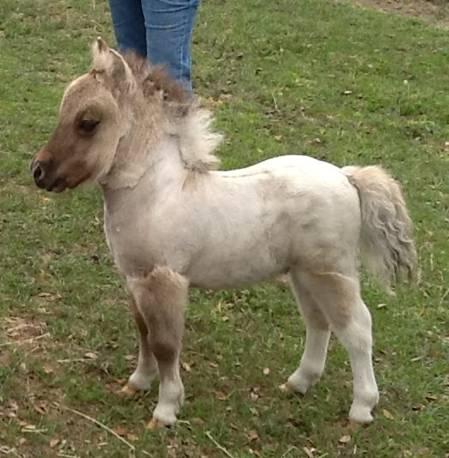 Cutest Horse In The World | www.pixshark.com - Images ...