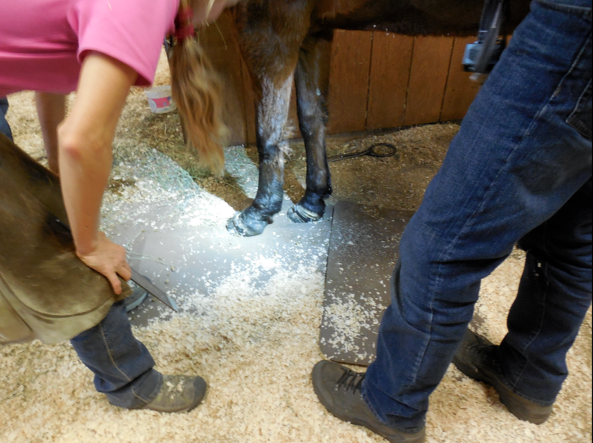 The Founder Warrior and Mark studied her hoof.