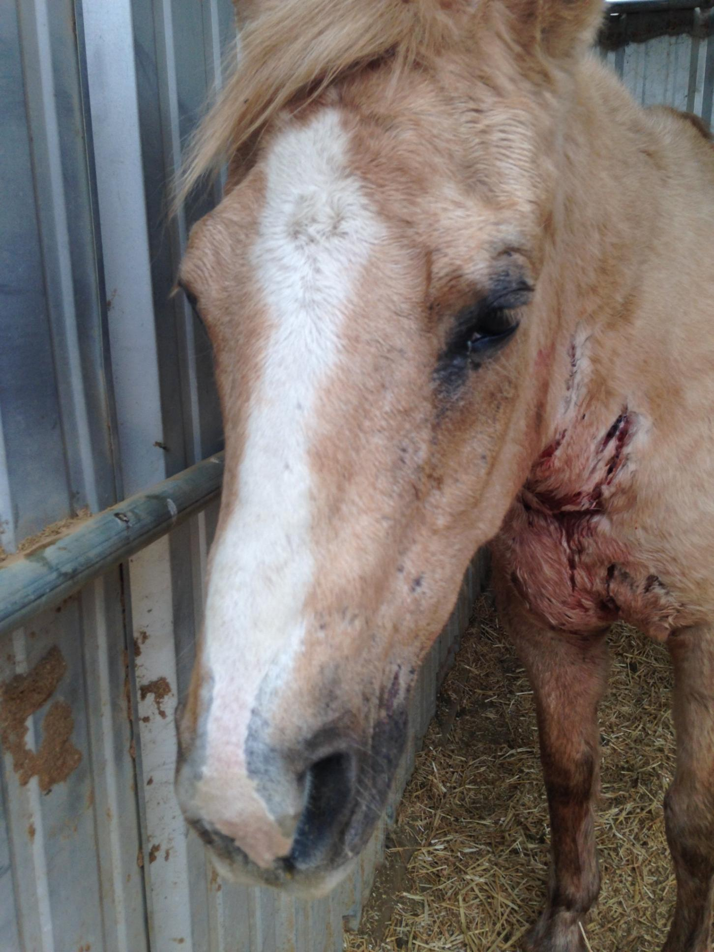 If you'd like to help, please click image to go to read Xena's story!