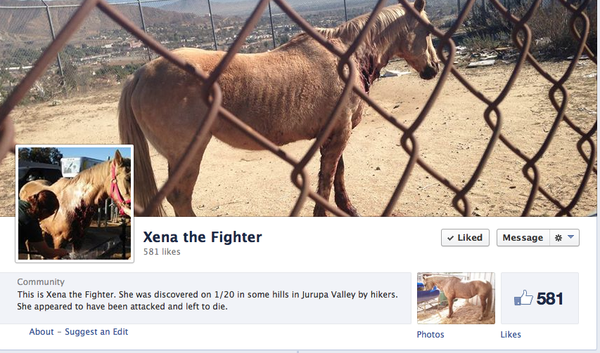 You can follow Xena's progress on her FB page.  Click image to go.