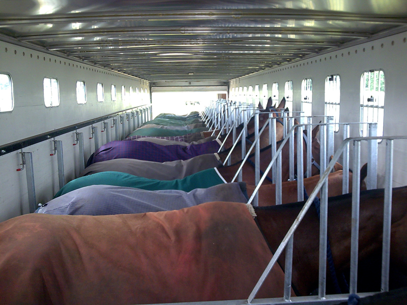 People argue all points of horse  hauling... position, dividers, windows... My conclusion is that dividers help with balance.