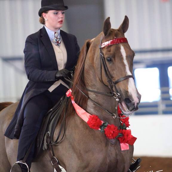 I don't know who this is, but she is showing Hollywood 24 under saddle in English Pleasure. He looks very cute!