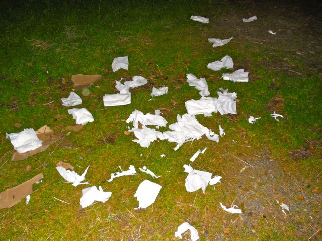 I couldn't find my box of tissues during my last trip to the barn... As I walked out, lookey what the puppies did for me.  Nice of them, eh?