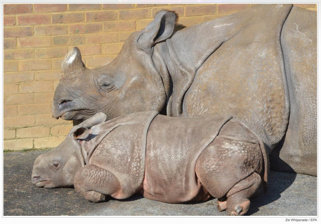 Love Rhinos…