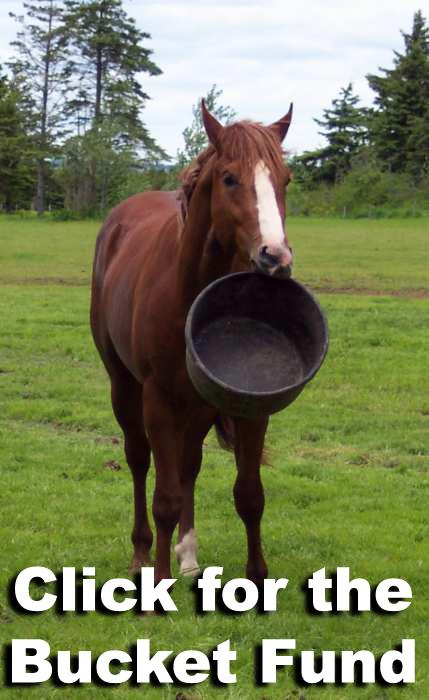 bucket-horsegd177