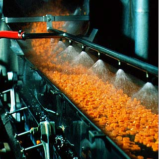 Carrot processing...