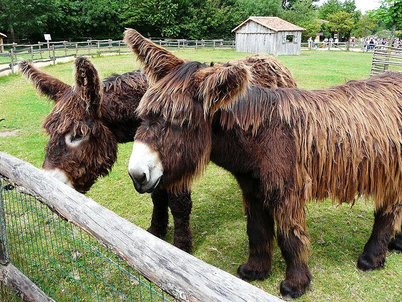 Gallery For > Breeding Horses And Donkeys