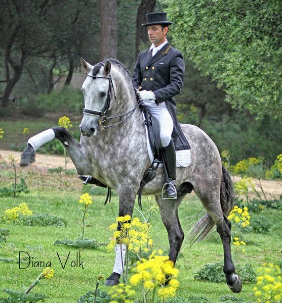 http://horseandman.com/wp-content/uploads/dressage-horse.jpg