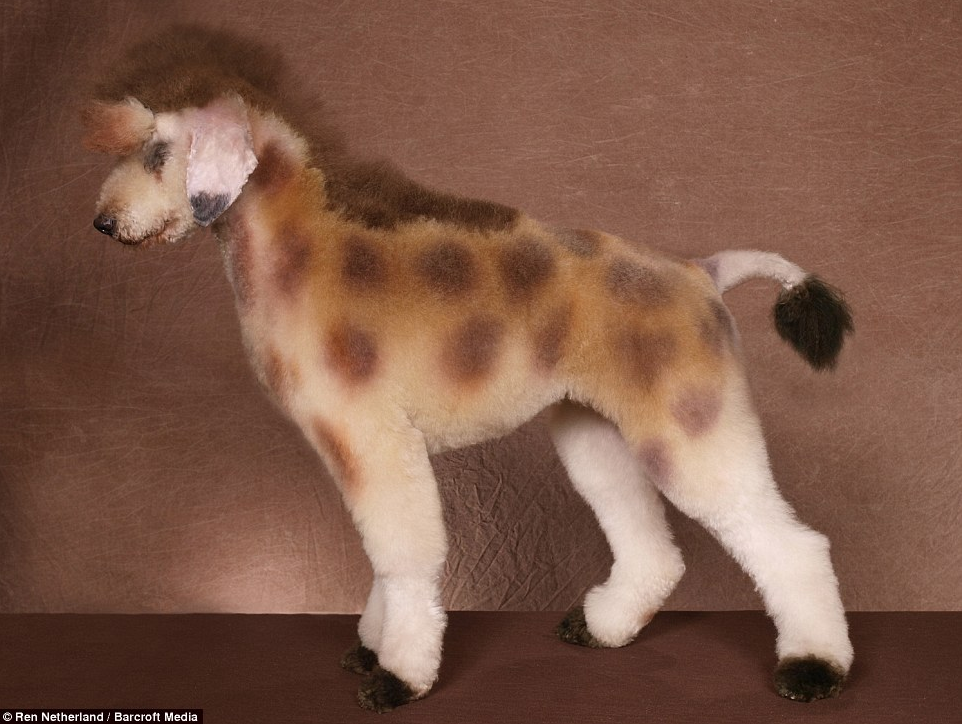 Giraffe dog - photo#4