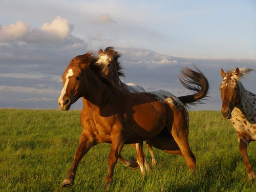 How do Horses Celebrate?