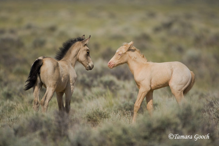 Saturday is PhoBlog Day! Glorious wild horses, catnbird ...