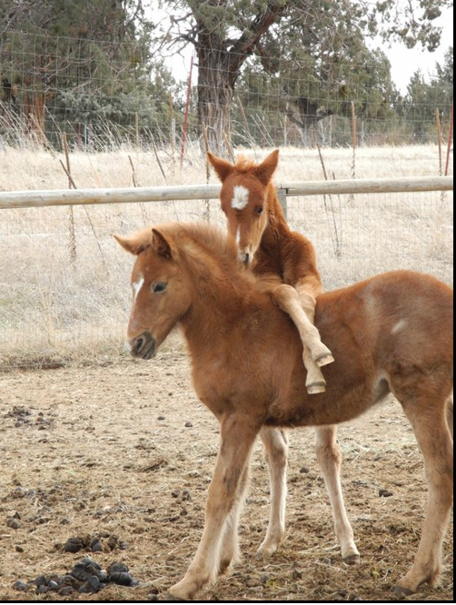 Go Back > Gallery For > Cute Foals Running Horse Png